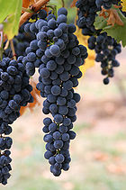 140pxwine_grapes03